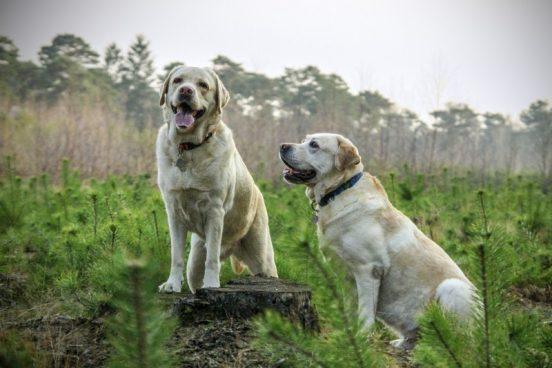 Køb foder til din hund hos Simbas Foder