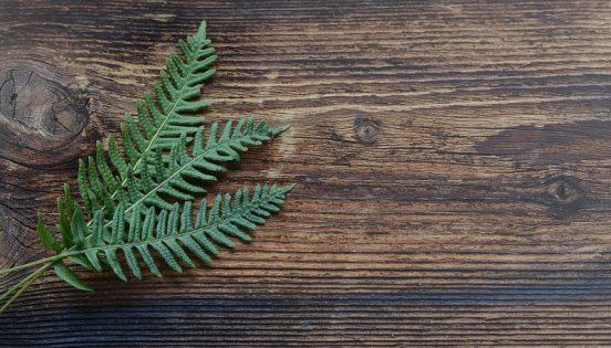 Skab grønne og hyggelige rum med kunstige træer - uden besværet med at vande