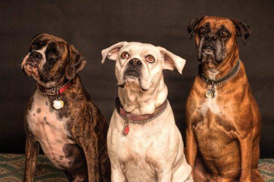 Forlæk din hund med hundemad, godbidder og hundeudstyr fra Barksnbones.dk